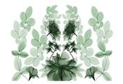 Emerald Growth 1