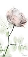 Loving Rose 1