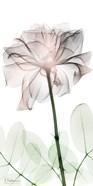Loving Rose 2
