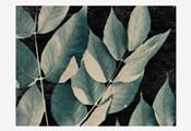 Dusty Leaves 1