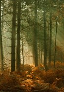 Wyre Forest 3