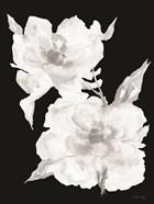 Black & White Flowers II