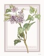 Lilacs V