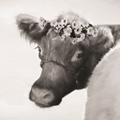 Brown Cow with Flowers