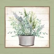 Pot of Herbs II