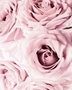 Pink Rose Cluster Crop