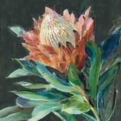 Deep Protea Crop