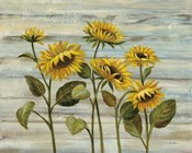 Cottage Sunflowers