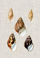 Antique Shells on Linen II