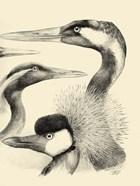 Waterbird Sketchbook I