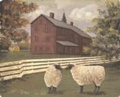 Hancock Sheep