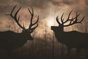 Elk Sunrise III