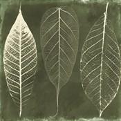 Columbian Forest I
