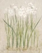 Narcissus Light