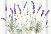 Floursack Lavender V
