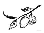 Ink Lemon