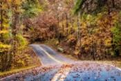 Woodland Road II