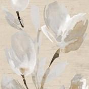 Neutral Tulips II