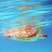 Underwater Depths I