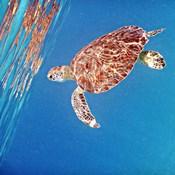 Underwater Depths II