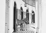 Zebra Hotel