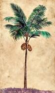 Coconut Tribal Palm II
