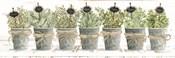 Herbs in a Row
