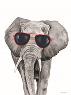 Looking Cool Elephant