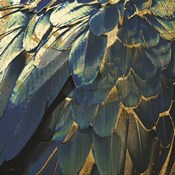 Navy Gold Feathers