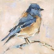 Bird Variety III
