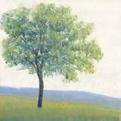 Solitary Tree I