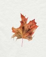 Watercolor Autumn Leaf II