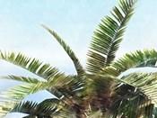 Pleasant Palms I
