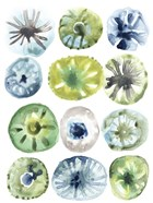 Sea Urchin Assortment I