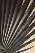 Fan Palm Detail 2