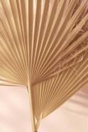 Pastel Fan 1