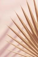 Pastel Fan 4