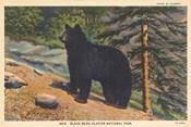 Black Bear I Crop