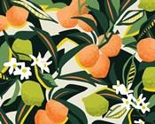 Sweet Orange Lime