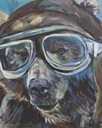 Pilot Bear 1