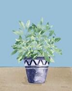 Herb Garden V White Navy
