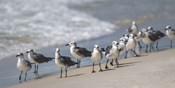 What's Up Gulls