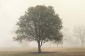 Trees in the Fog I
