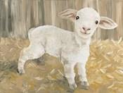 Titus the Tiny Lamb