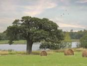 Summer Hay Harvest