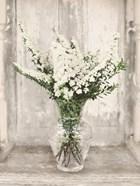 Bridal Veil Flowers