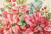 Our Christmas Story Poinsettias