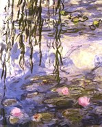 Waterlilies (pink flowers)