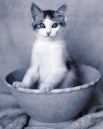 Kitten Sitting in Bowl
