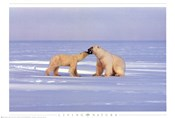 Polar Bear Courting